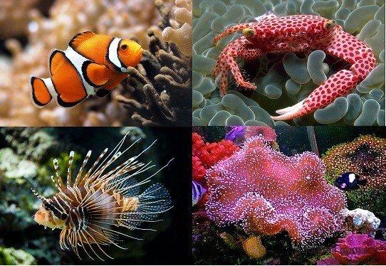 Аквариумные сомики : разновидности с фото, названиями, описанием