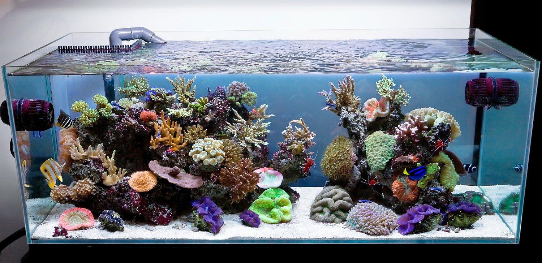 Искусственные кораллы для аквариума своими руками
