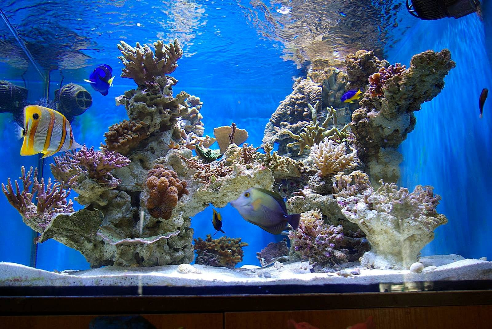 дизайн аквариума картинками