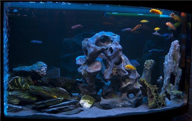 Дизайн аквариума с цихлидами