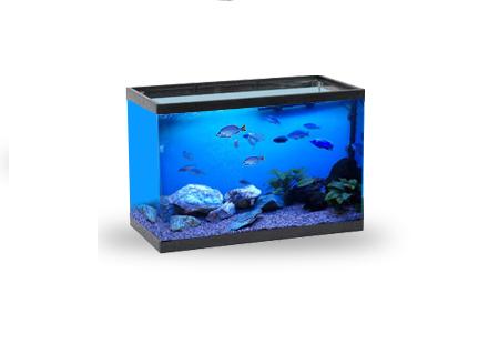 пресноводный аквариум с цихлидами