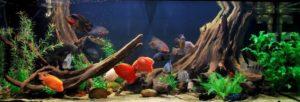 Аквариумная рыба озер Америки; Цихлиды озер Америки