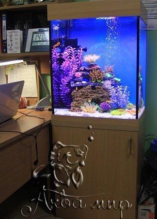 пресноводный аквариум псевдоморе